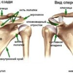 Симптомы остеохондроза лопатки и методы лечения