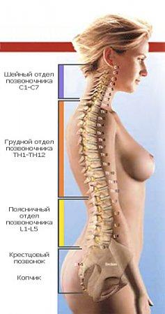 Cколиоз грудного отдела позвоночника