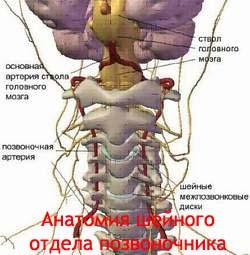 Боль в шейном отделе позвоночника: причины, симптомы и профилактика