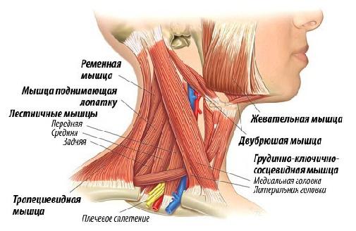 Шейный миозит и различные способы его лечения