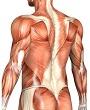 Миозит мускулов спины