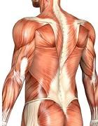 Миозит мышц на спине