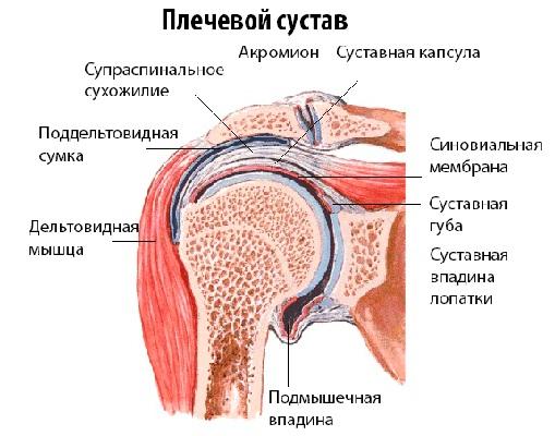 Артрит плечелопаточного сустава цена на замену тазобедренного сустава